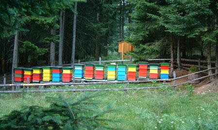 Bienenstand beim Bienenlehrpfad