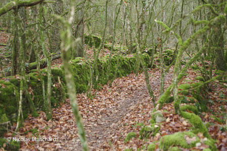 Muret de pierres sèches, limites de parcelles, Rhône.