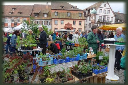 Ableger und überschüssige Pflanzen werden in Gengenbach auf dem Bauernmarkt angeboten.