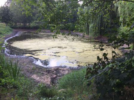 Der Teich am Parchener Schloss ist fast ausgetrocknet. Hunderte Fische sind verendet. Foto: Alpha-Report