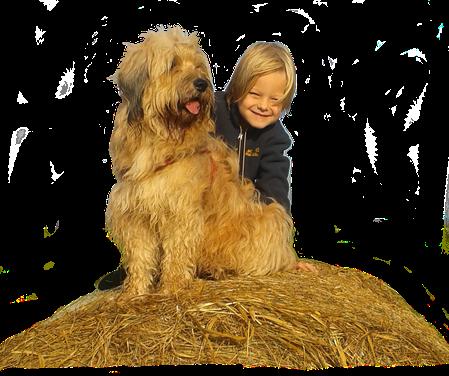 Tibet-Terrier mit Kind auf der Seite Home der Hundeschule MOMO - Hundeschule Bremen & Lilienthal