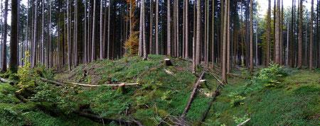 Panorama der Keltenschanze im Laufzorner Holz (gut zu erkennen ist der Graben vor dem Wall)