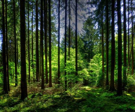 Deisenhofener Forst