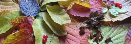紅葉のタペストリー