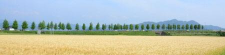 麦秋の文殊山