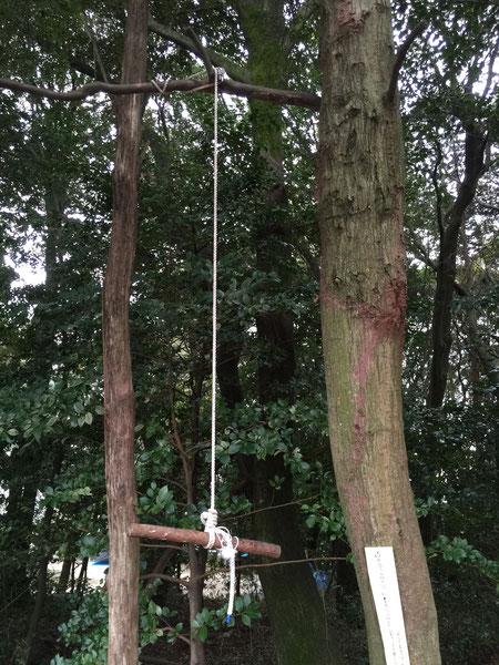 林の中で見つけたアスレチック。白いロープに一瞬ドッキリしたのですが大丈夫でした!