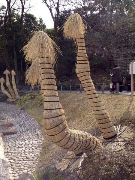 ソテツの冬養生 こもの巻き方 東京 浜離宮恩寵庭園風