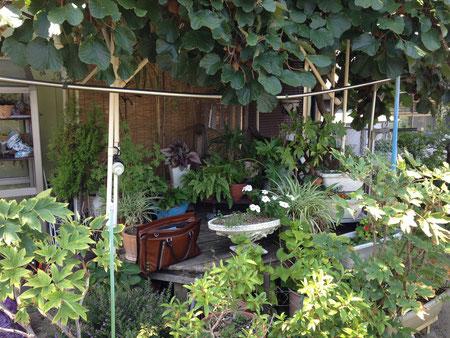 元々はキウイ棚を楽しまれていたお庭 こちらへガーデンルームを設置する計画でした