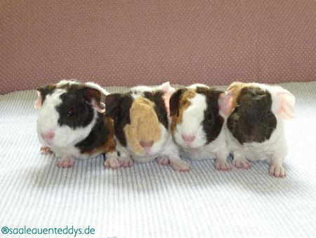 Dexter, Danny, Donna, Domingo
