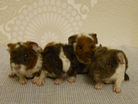 Babsi, Belinda, Biene, Bennie