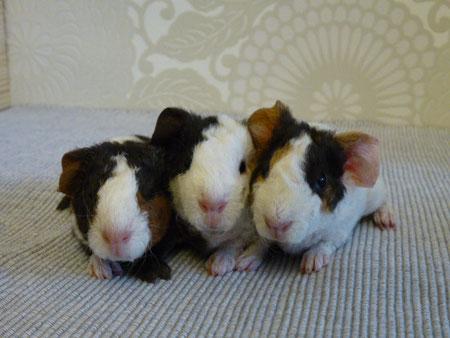 Anton, Agnes, Amadeus