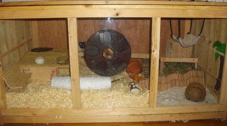 Holzkäfig, ebaykäfig, Lemon, Hamster, artgerechter Käfig, artgerecht, artgerechte Haltung, artgerechte Hamsterhaltung