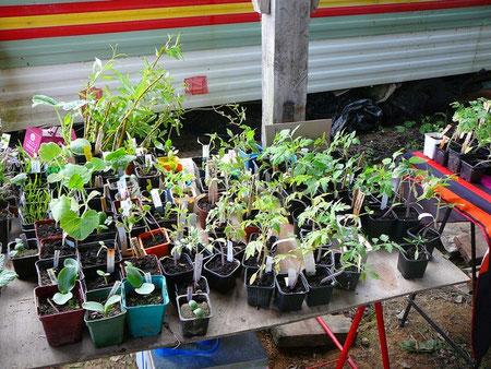 Un très large choix de plantes potagères, aromatiques, vivaces, arbustes, arbres fruitiers, plantes d'intérieur, ainsi que quelques graines ont été apportés par les participants