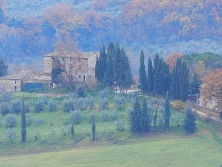 トスカーナの糸杉がある田園風景