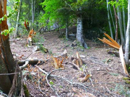 Sous la violence des chocs les arbres ont explosé