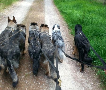 6 coole Hunde