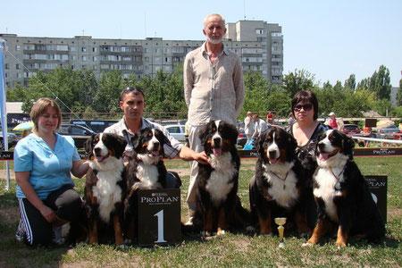 Бернский зенненхунд , собаки щенки питомник