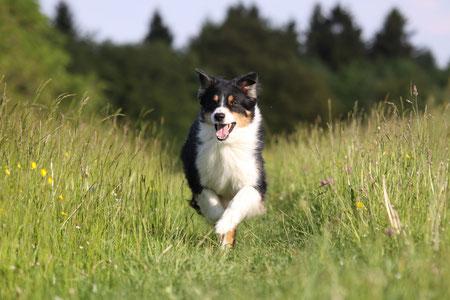 (c) Hundeschule Social-Dog