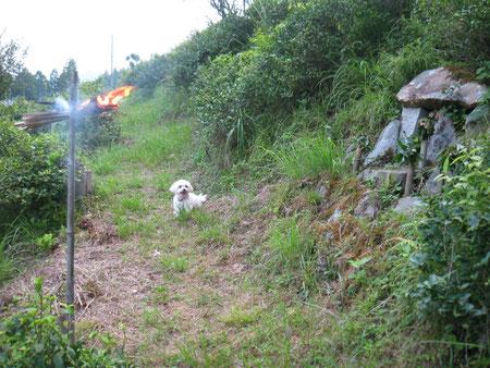 常蓮山の参道で、今日は松明を焚く日でした。右に五つの石仏が見えます。「続きを読む」へどうぞ