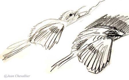 grimpereau des jardins certhia brachydactyla