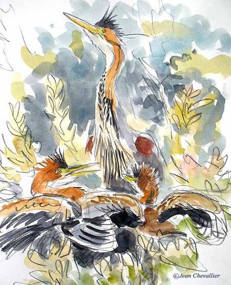 purple heron Jean Chevallier