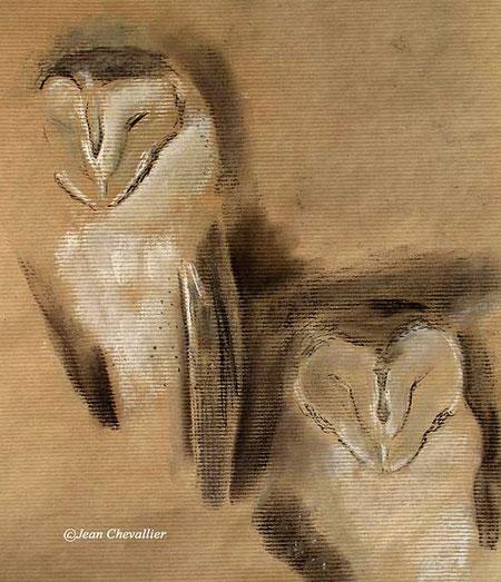 barn owl pastel jean chevallier
