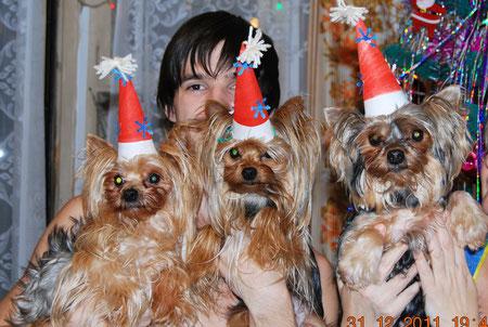 C Новым Годом-2012г.!