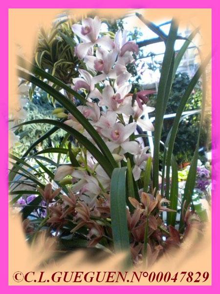 Là, on voit bien les grandes hampes florales, certaines variétés sont très parfumées...