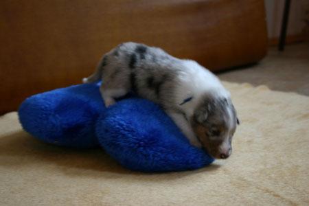 2./3. Woc ( Der kleine Eisbär, Anjouk )     -    vergeben