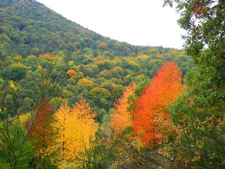 Pfälzer Herbstwald