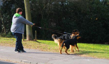 Hunde gehen mit Herrchen Gassi - hier in Neunkirchen