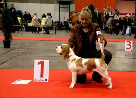 "Internationale Dog Show Brussels ( B ) Candy "" V 1   / CAC  2. bester Gebrauchshund  Richterin Lisbeth Utke Ramsing ( DK )"