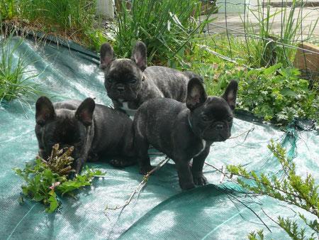 Fred, Fanny & Fancy