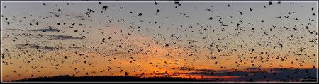 Fledermäuse im Sonnenuntergang (zum Vergrößern bitte Anklicken)