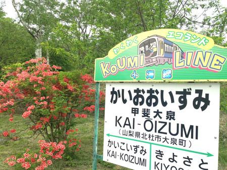 大泉、清里はこのヤマツヅジが咲いているときです。新緑も美しい。