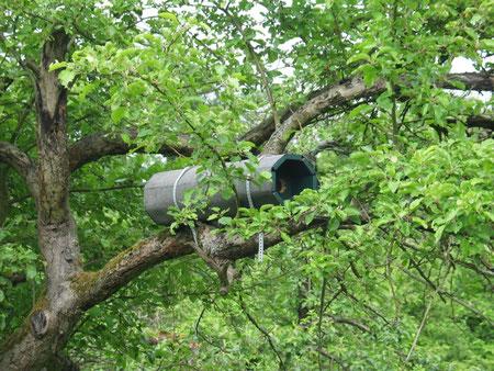 Viele Steinkauzröhren wurden in den Friedberger Gemarkungen aufgehängt