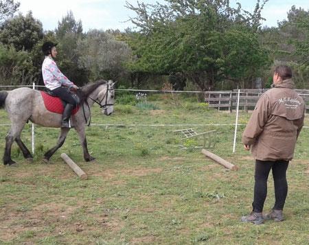 Cours cheval/cavalière débutant