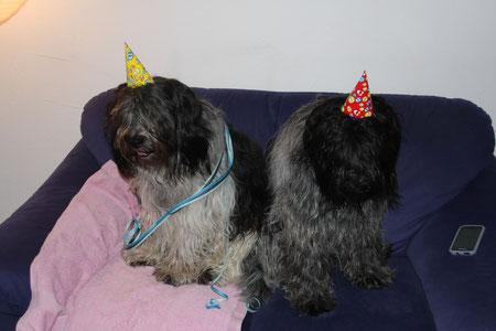 Zwei Party-Löwen