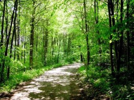 スイスの森
