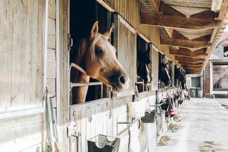 Tiere, Pferd, Hund, Katze, Hundehalterhaftpflicht, Pferdehalterhaftpflicht, Tierkrankenversicherung