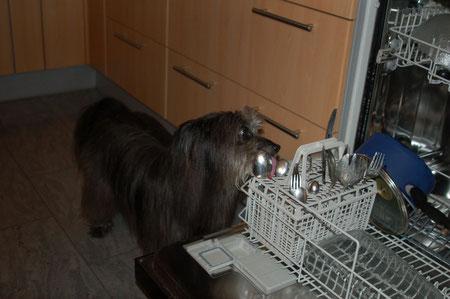 brauchte aber einen Nebenjob als Geschirrspülerin / but needed a side job as a dishwasher