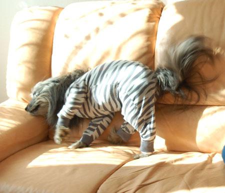 Evt. geht das blöde Ding ab, wenn ich wie wild übers Sofa rase?