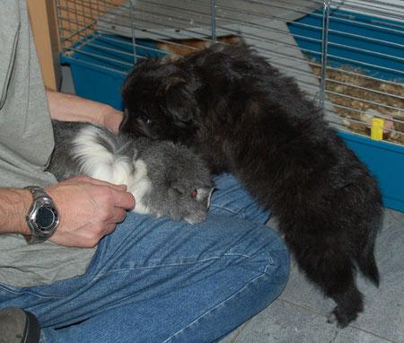 meine Karriere startete ich mit der Betreuung von Meerschweinchen / starting my carreer taking care of guinea pigs