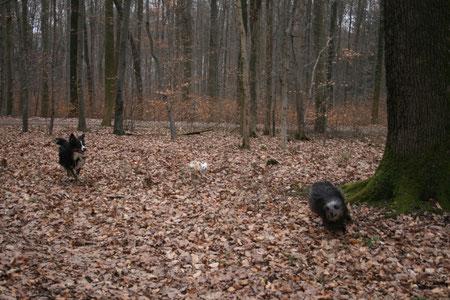 Rio, Joy und Lady beim Spielen im Wald