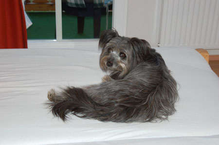 Ups Frauchen, ist das echt Dein Bett?