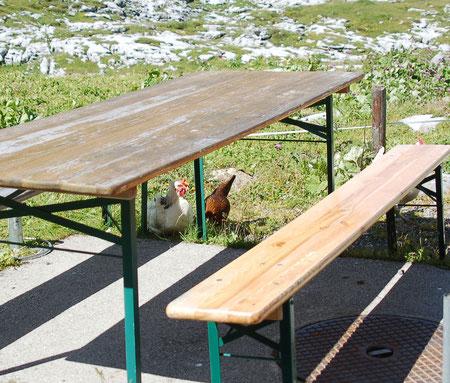 hier laufen die Hühner frei