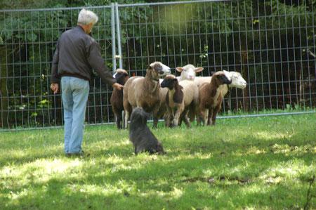 Lady sitzt vor den Schafen (musste sie gemäss Lynn)