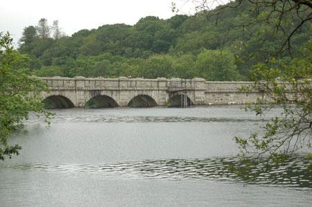 wieder zurück am Ausgangspunkt - dem Damm