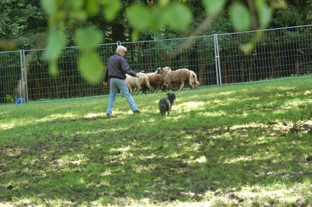 Lady geht langsam auf die Schafe zu