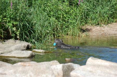 Lady schwimmt ans Ufer
